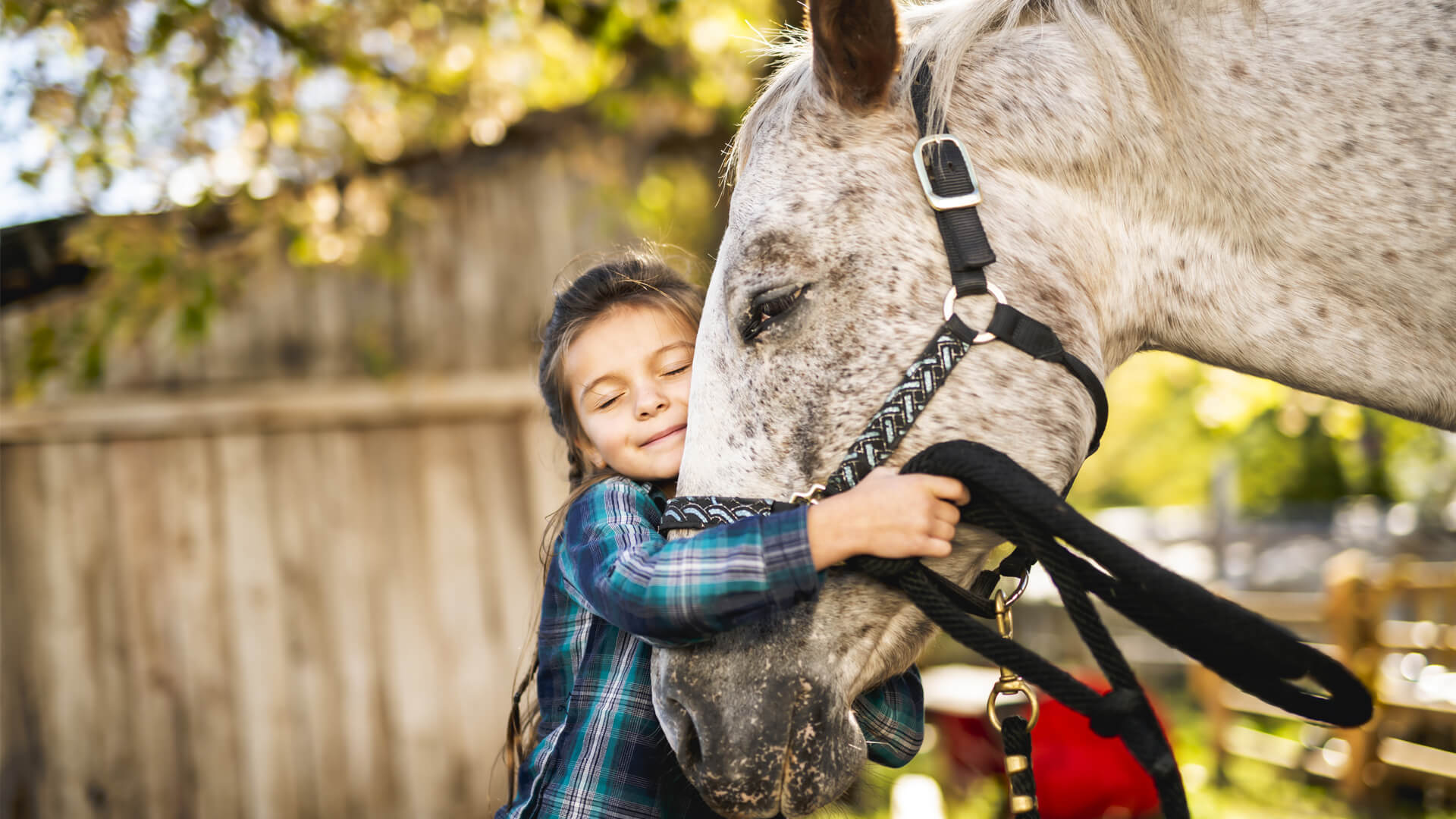 Healing Through Horses | Equine Assisted Therapy