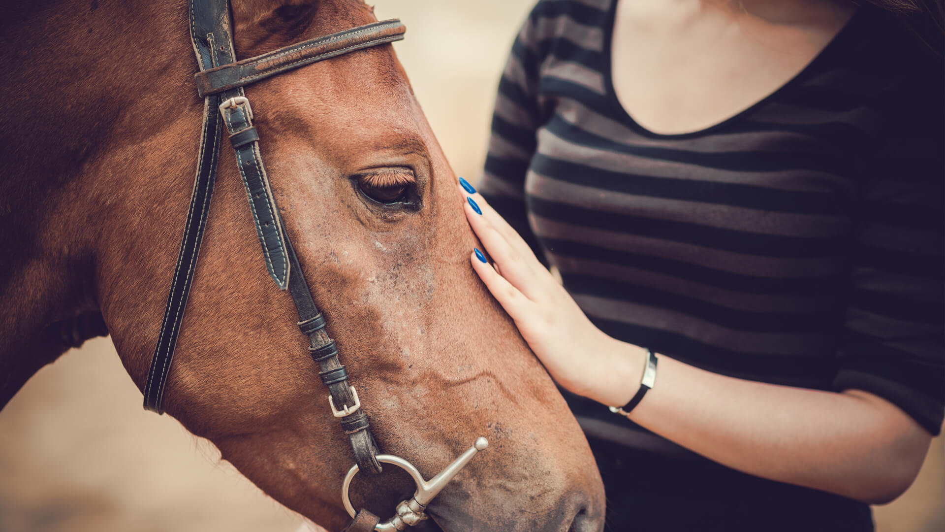 Healing through Horses   The amazing power of partnership